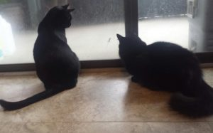 Cats at sliding glass door
