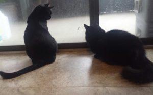 Cats at sliding glass door