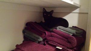 Cat in closet